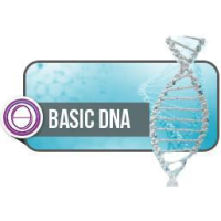 DNA BASE