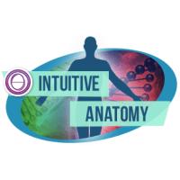 Anatomia Intuitiva