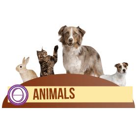 ThetaHealing® Corso Animali